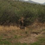TBD  X9 Ranch Road